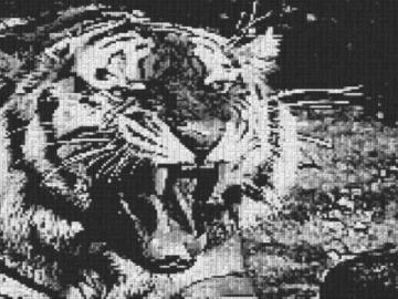 Vorlage für Ministeck Tiger 80x60cm schwarz/weiß als Entwurfdruck