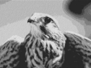 Vorlage für Ministeck Falke 80x60cm schwarz/weiß als Volldruck