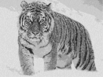Vorlage für Ministeck Tiger im Schnee 80x60cm schwarz/weiß als Volldruck